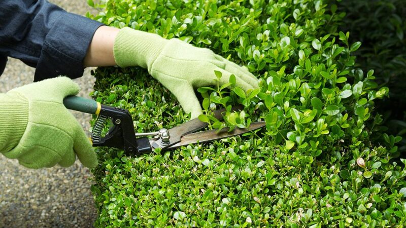 Aménagement extérieur d'un jardin et entretien du matériel nécessaire